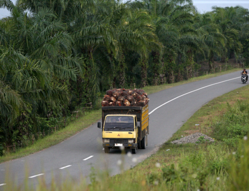 The Golden Oil – Replacing the Dinosaurs? A study on The Sustainability of Palm Oil-based Biodiesel